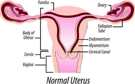 Uterus and Disorder